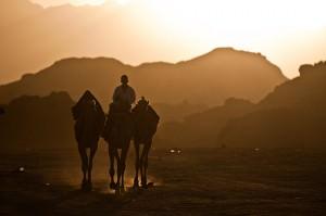 Kameler i Sinai