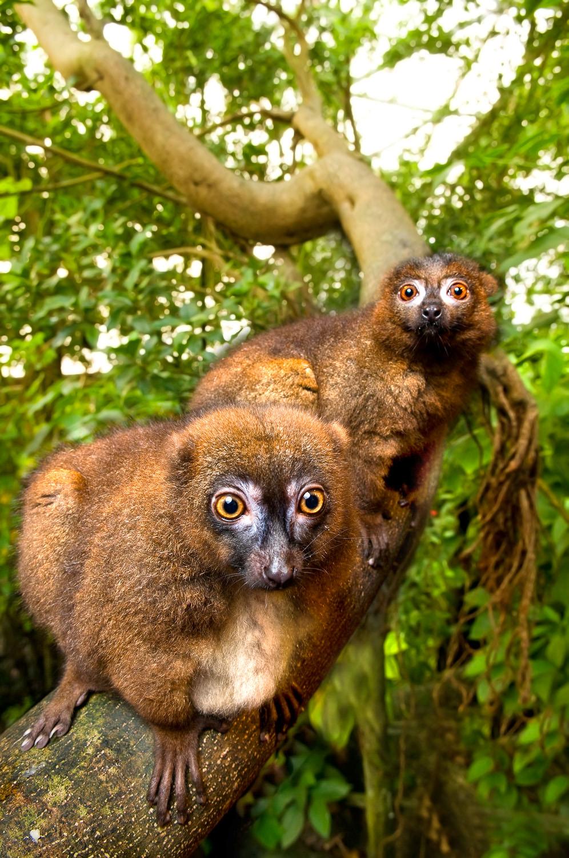 Lemur forside 02(800)