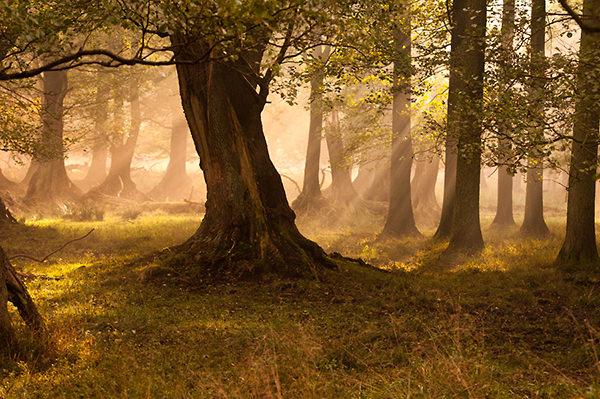 fairytale-forest-da0dccf8eca6ef298f21d0b32d89fd0d03c7702b