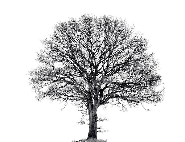 old-tree-52bbdfcc5acc9c84bffe925c0a325e88c5b5319f(600)