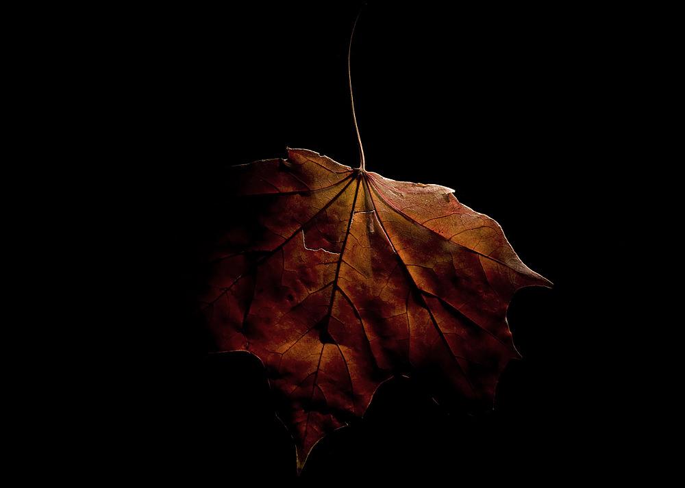 autumn-inside-47a740f1a89ab1ac0b1e43845ce5e23d2c9085c7