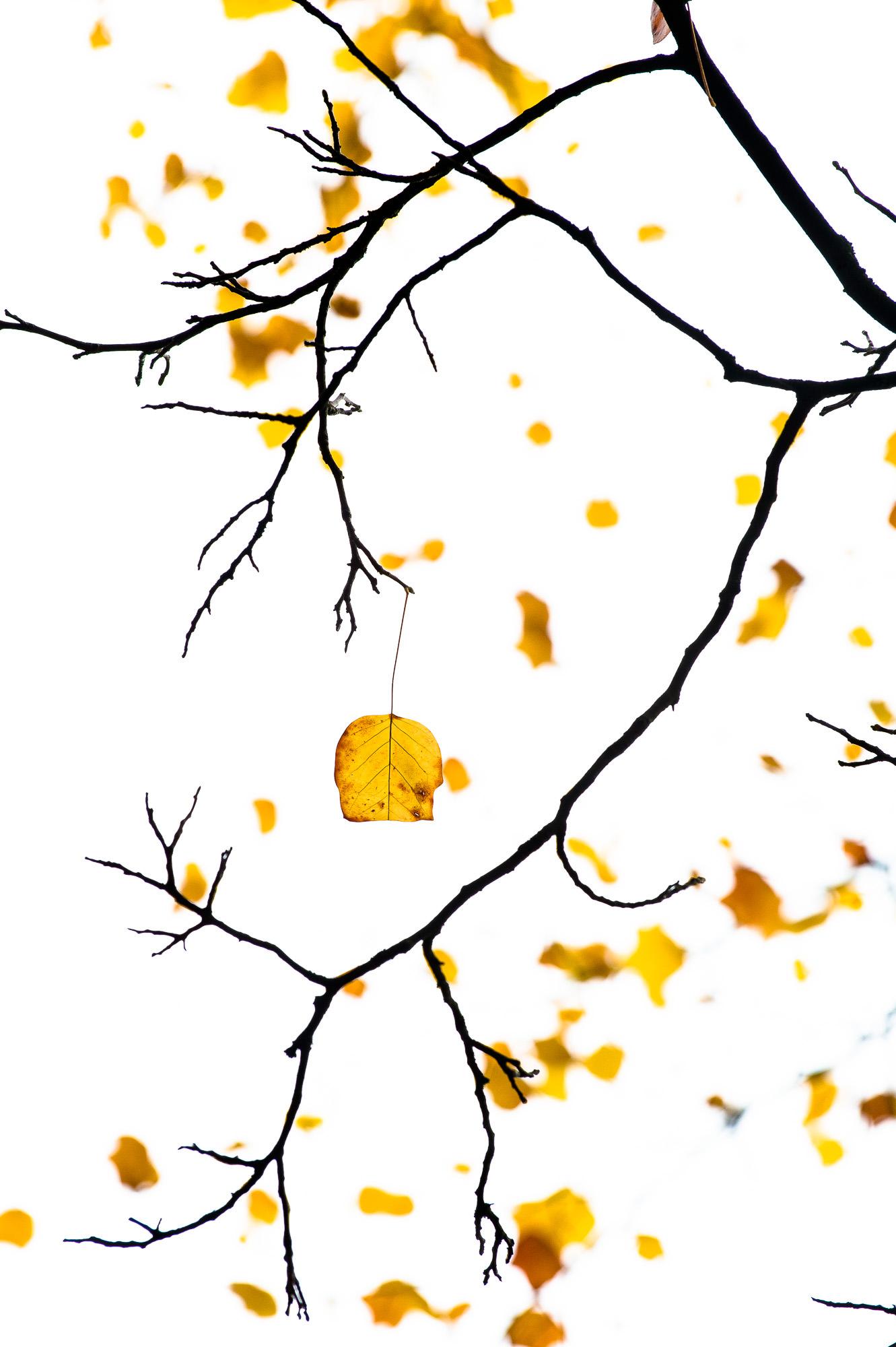 2014_oktober_18_-5