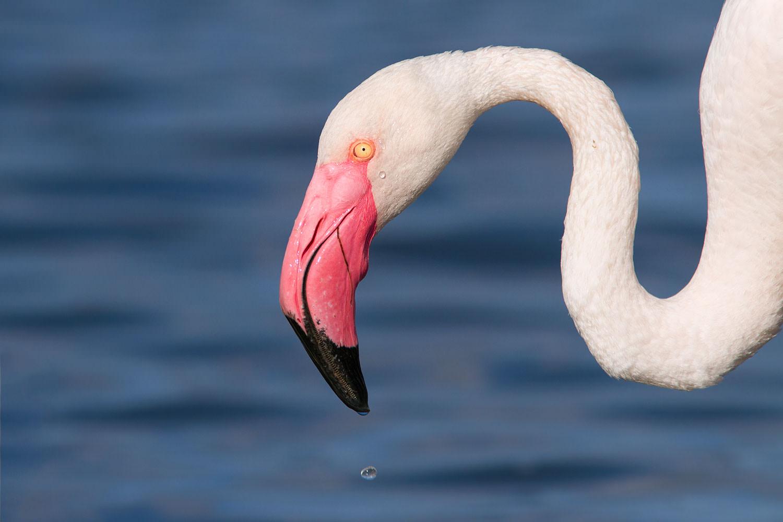 Flamingo-portræt4(1500)