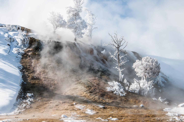 Skægget var lige så isbelagt, som træerne her, efter et besøg i Mammoth Hot Springs på en smuk vinterdag med 25 graders frost. Yellowstone Nationalpark, Wyoming, USA. Grej: Nikon D300s + Tamron 17-35 f/2.8-4. Indstillinger: 1/250 sek., f/16, ISO-200, 35mm.