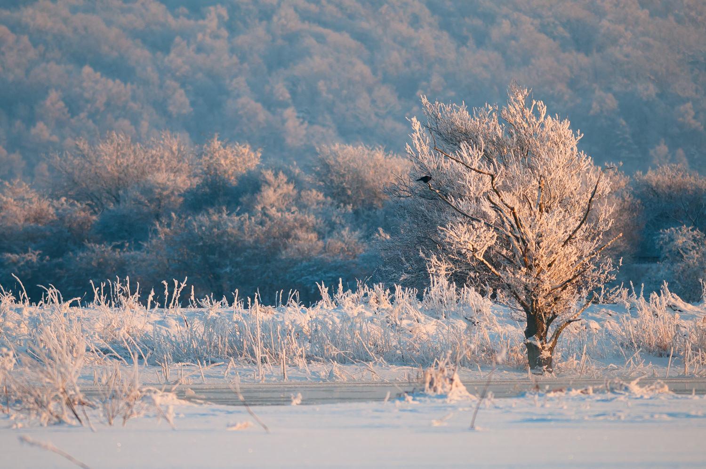 Solnedgangen maler landskabet i pastelfarver på noget så sjældent, og savnet, som en dansk vinterdag med temperaturer under de minus 15 og masser af magisk sne og frost. Gudenåen ved Randers. Grej: Nikon D300s + Nikkor 300 f/2.8 VR. Indstillinger: 1/2000 sek., f/2.8, ISO-200.