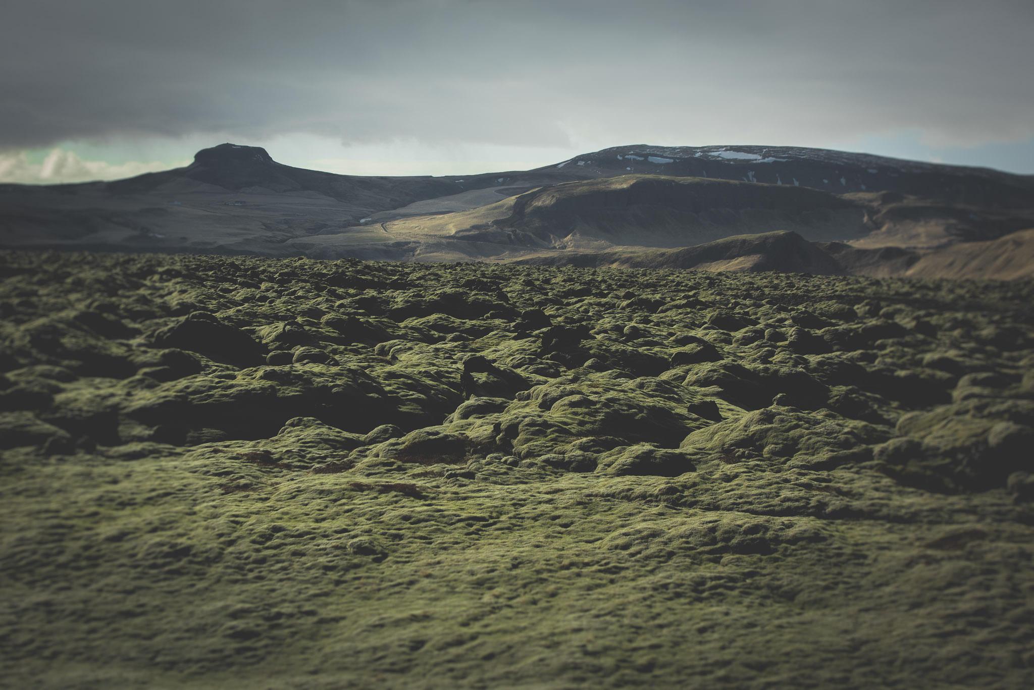 Lavaen har formet naturen,  imens mosset har taget over. For en Amagerkaner som mig, er det imponerende, for en Islænder nok ikke så meget.