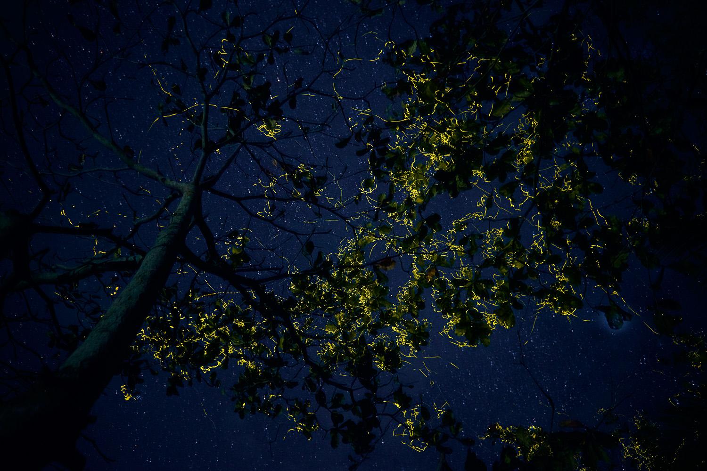 natfotografering af ildfluer