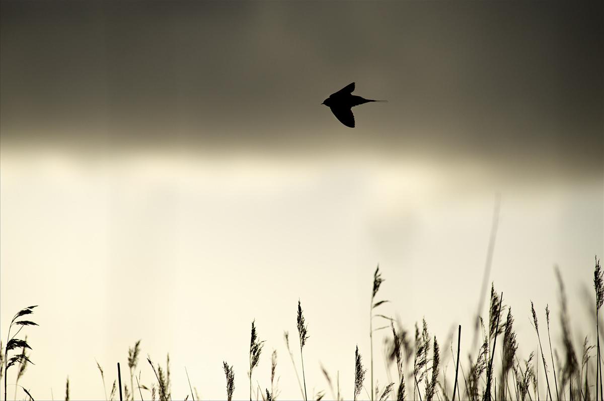Foto: Carsten Krog Pedersen