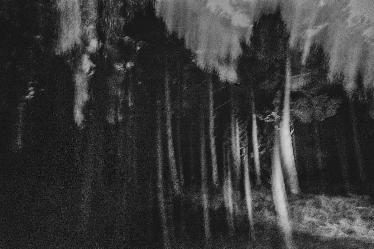 Og når det er blevet helt mørkt, forvrænges skoven og bliver næsten uigenkendelig.