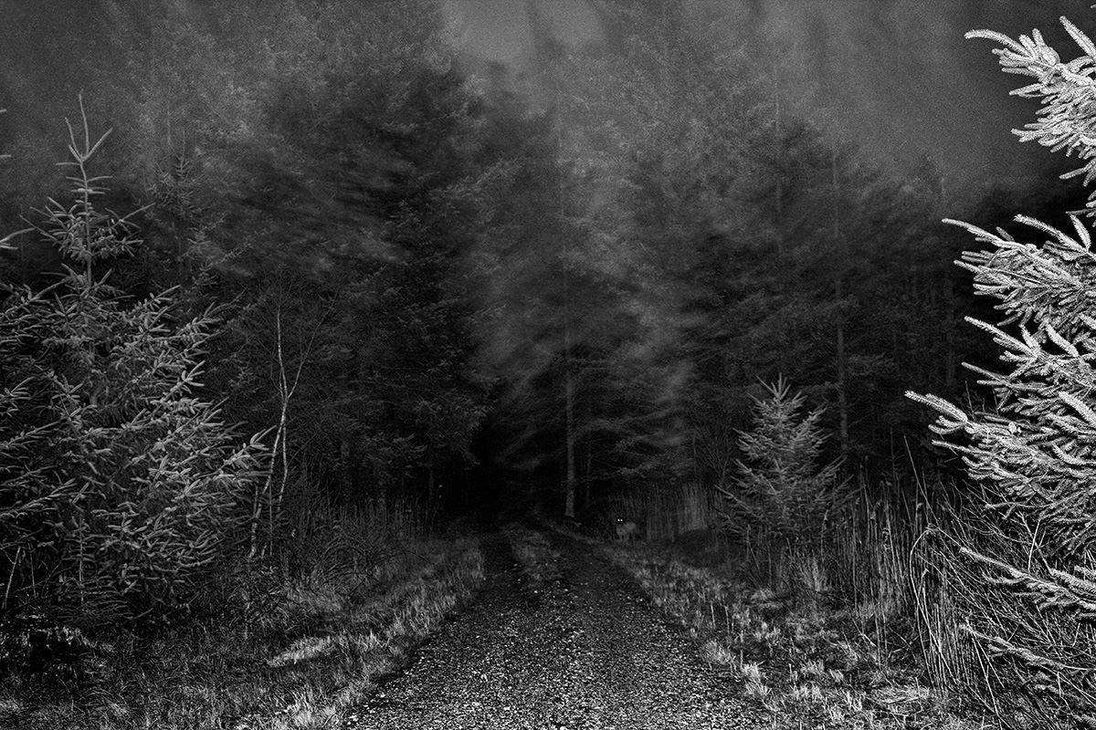Nogen, eller noget, lurer i den mørke skov...