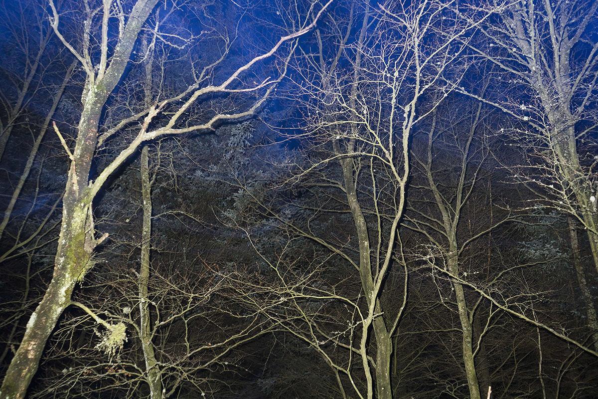 I aftenskumringen får skoven et ekstra strejf af mystik.