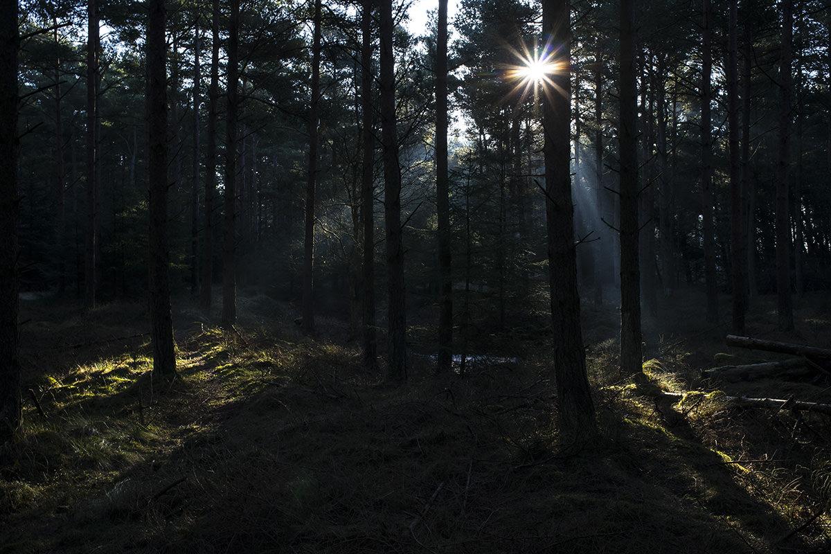 Det er svært at modstå, når morgensolen gør det der mellem træerne, og det hele bliver så pænt...
