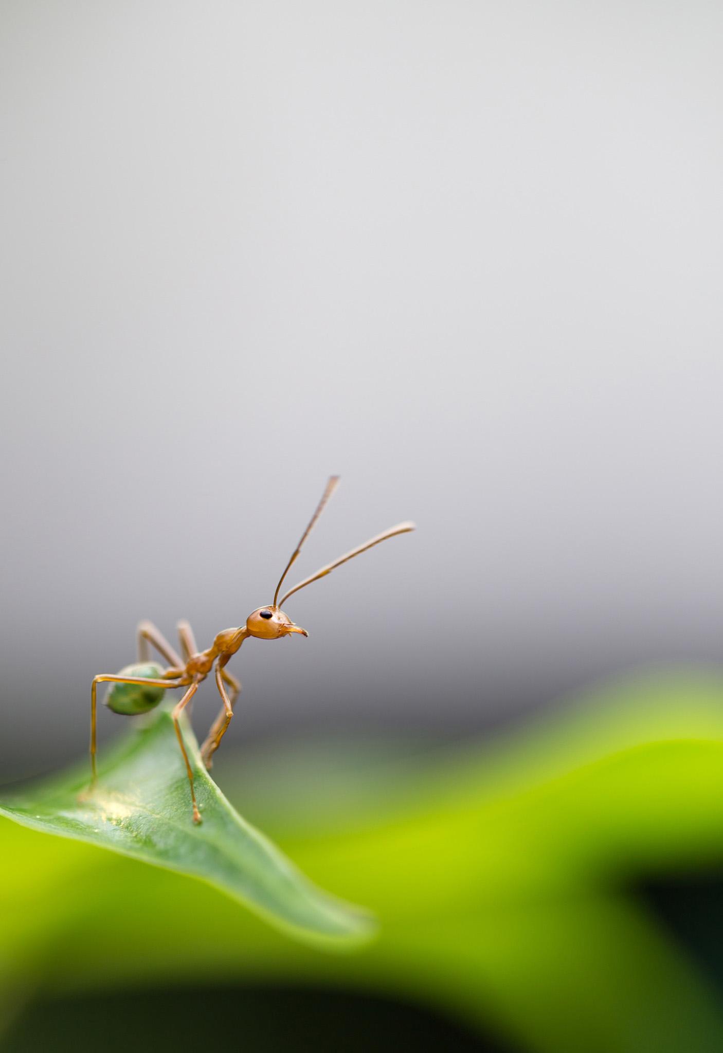 Det var Myren, der startede det hele…
