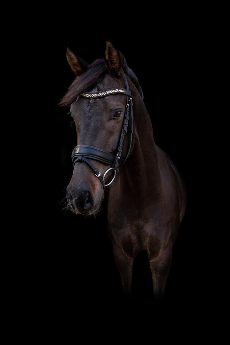 Fra hest til jet