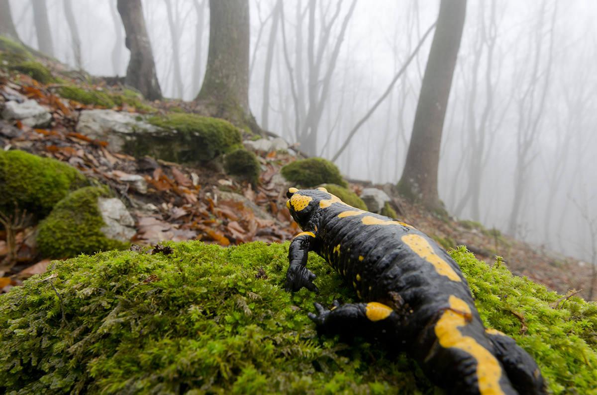 Fotorejse: natur & kultur i Ungarn