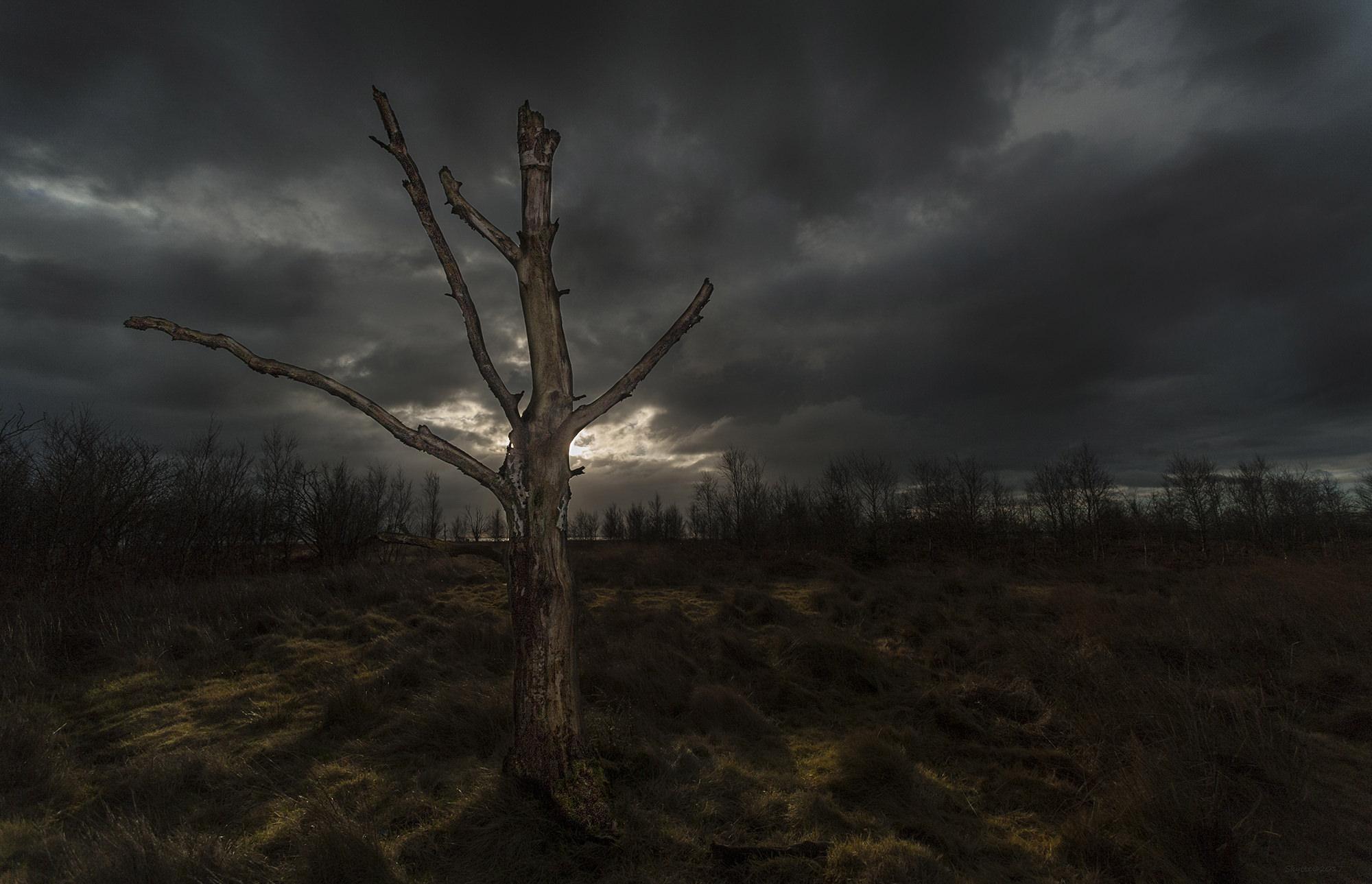 Træet - Enebærodde