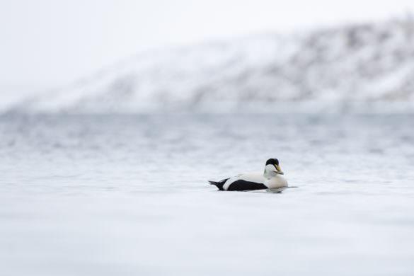 Angstprovokerende? – Island med kun 2 objektiver!